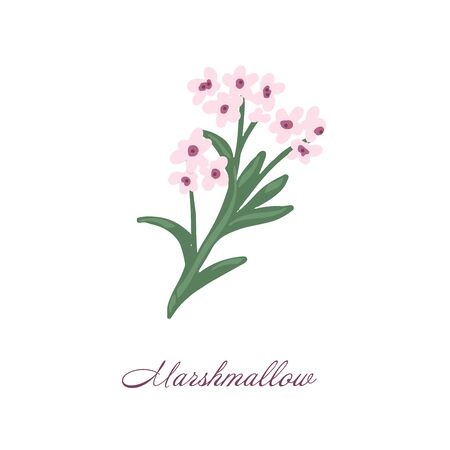 Marshmallow flower. Color medical herbs and plants Isolated on white background series. Vector illustration. Art sketch. Hand drawing object of nature. Vintage engraving style. Green and pink. Vettoriali
