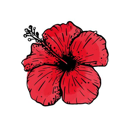 Hand drawn sketch of tropical red hibiscus flower. Botanical floral element for design, cards, clothing, web and print. Vector illustration can be used for logo. Vettoriali