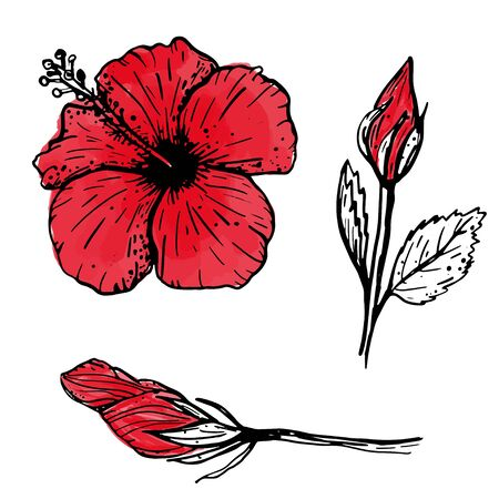 Set of hand drawn red tropical hibiscus flowers sketch. Botanical elements collection for design, cards, clothing, web and print. Vector illustration can be used for logo. Vettoriali