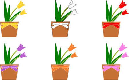 Tulip potted plants 6 colors