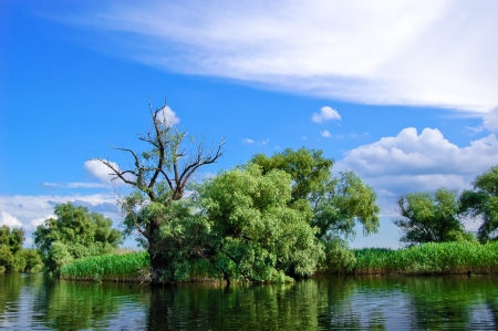the danube: A watter channel bank in the Danube Delta Stock Photo