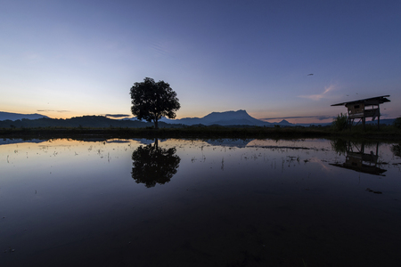 kampung: An old hut, a single tree and the majestic Mount Kinabalu reflection in an a smoothly lit first light in Kampung Sangkir, Kota Belud, Sabah. Stock Photo