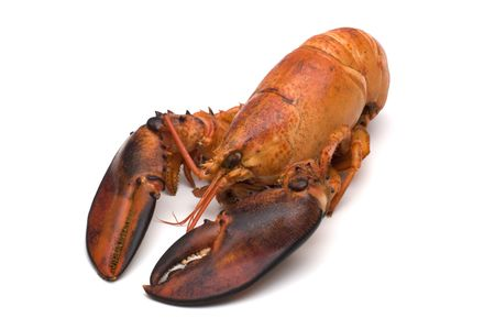 lobster on white background photo