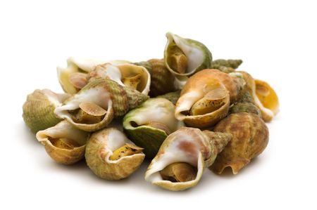 cooked shell on white background
