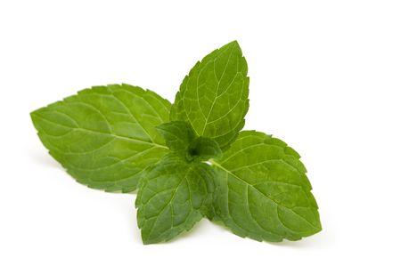 Fresh food leaves on white background