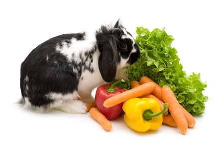 rabbit and vegetables on white background photo