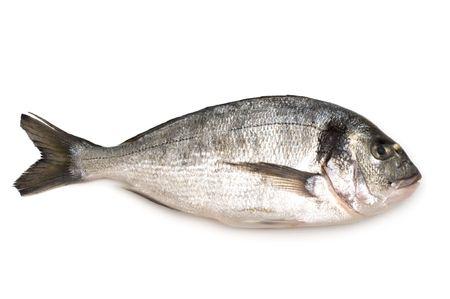 白い背景の上ドラーダ魚 写真素材