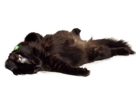 moggi: resting black cat on isolated white
