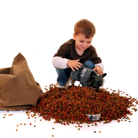 messy clothes: Preschool boy trying to help his pet yorkie eat the heap of dry dogfood he Stock Photo