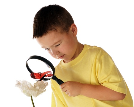 A kindergarten boy trying to study a butterfly by looking through a magnifying glass   Isolated on white  photo