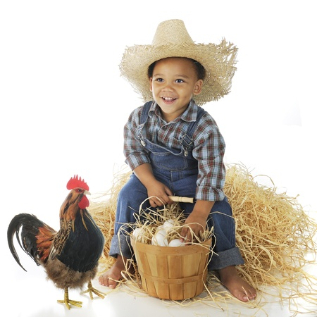 A delighted preschool farm boy sitting on a hay stack with a basketful of eggs, a rooster standing nearby   On a white background  photo