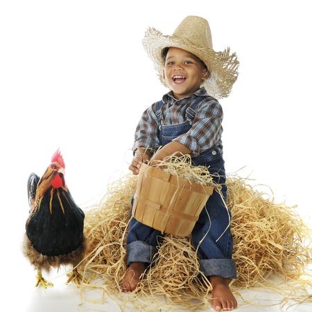 Un muchacho adorable granja biracial la celebración de una cesta llena de huevos mientras está sentado en una pila de heno, un gallo que se coloca cerca de Sobre un fondo blanco Foto de archivo