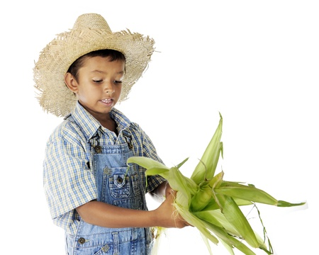 An adorable young farm boy husking an ear of corn   On a white background  Imagens