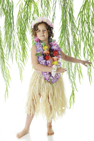 leis: An elementary Hawaiian dancer dancing amoung hanging branches of leaves.  On a white background. Stock Photo