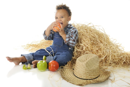 An adorable preschool farm-boy munching on apples by a haystack.  On a white background. Stock Photo - 15045666