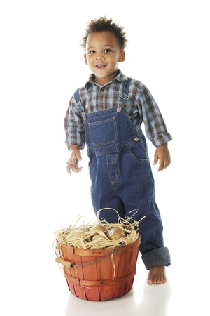 An adorable preschool farm boy with his basket full of potatoes.  On a white background. Stock Photo - 15041388