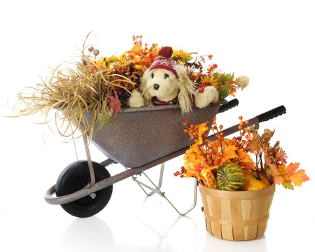 burried: A toy puppy wearing a red hat and sweater in a rustic weelbarrow burried under colorful fall foliage   A basket filled with gourds and more foliage sits at the base   On a white background