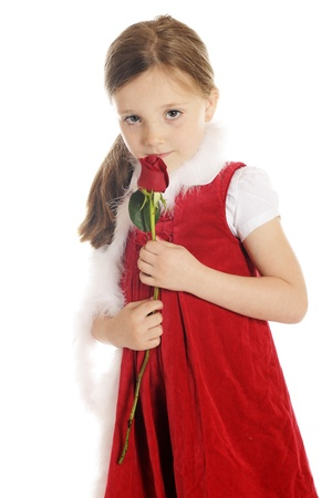 A beautiful elementary girl shyly looking up from sniffing a red rosebud   She photo