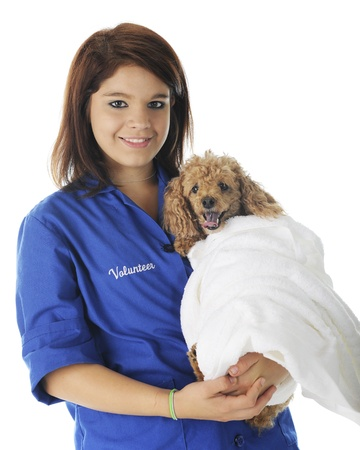A pretty young teenage vetinarian volunteer happily holding a toy poodle wrapped in a white towel.  On a white background. Stock Photo - 17036302