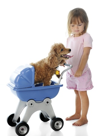 An adorable little girl giving a toy poodle a ride in her doll buggy.  On a white background. photo