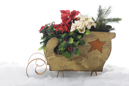 A rustic wood sleigh full of red and white poinsettias, Christmas holly and evergreens   On a white background  photo