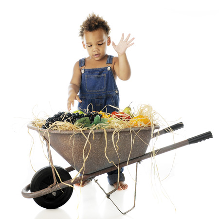 An adorable 2-year-old excited over a wheelbarrow full of fruit.  On a white background. Stock Photo - 24921704