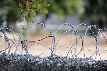 razor wire: Closeup image of loops of razor wire embedded in the top of a concrete wall
