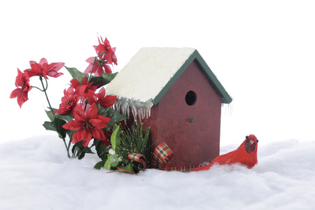 A wintery still life composed of a bird house, cardinal and red poinsettias.  On a white background. photo