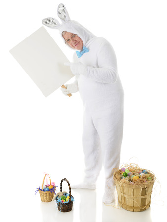 A senior male rabbit pointing to the sign he holds.  Its left blank for your text.  He stands among baskets of colorful Easter eggs.  On a white background. photo