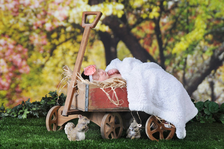 black newborn: An adorable newborn sleeping contendely outside under blossoming trees  in rustic old, hay-filled  wagon.