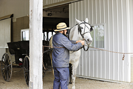 An Amish man preparing his horse to pull his 2-seater, opened buggy. Imagens