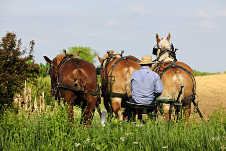 The back of an Amish man sitting on his plow seat behind three born horses on a bright spring day.