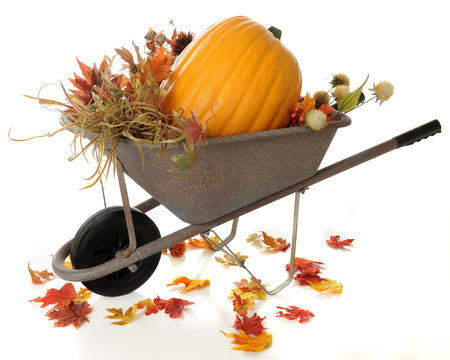 large pumpkin: A rustic wheelbarrow full of fall foliage and a large pumpkin.  Colorful fall leaves have fallen around the wheelbarrow.  On a white background.