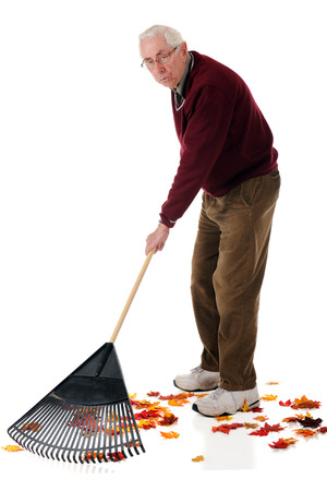 A senior man raking colorful fall leaves.  He has a weary expression.  On a white background. Stock Photo