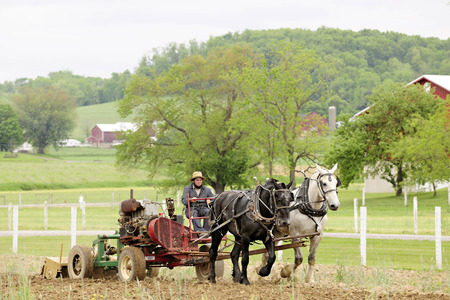 An amish man cultivating his fields in the springtime with a pair of horses.  Focus on man.