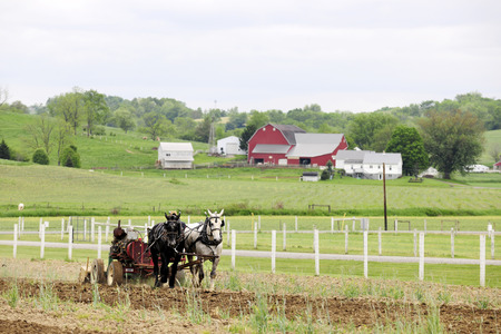 An Amish man (unseen except for his hat) cultivating his fields with a pair of horses among the green hills  and red barns of Tuscarawas County, OH.  Space in the overcast sky for your text. Imagens