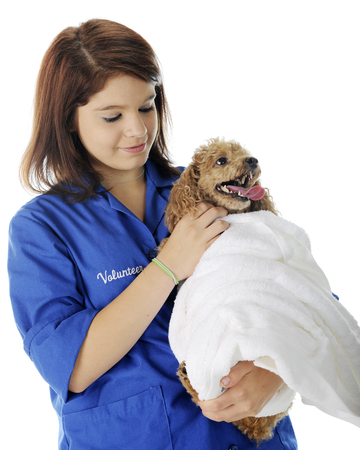 vetinary: A pretty vetinary volunteer petting the patient shes holding -- an apricot toy poodle who is wrapped in a white towel. On a white background.