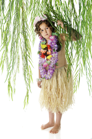 leis: An elementary Hawiian dancer making her way under tropical branches.  On a white background,. Stock Photo
