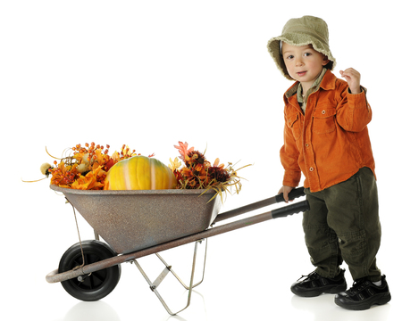 An adorable preschooler dressed in autumn colors pushing a wheelbarrow full of fall foliage and a pumpkin.  On a white background. photo