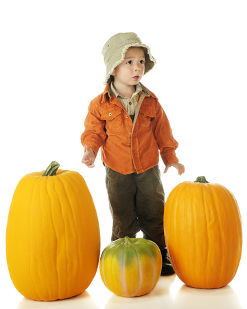An adorable preschooler mildly upset because he can't lift the pumpkin he wants for Halloween.  On a white background. photo
