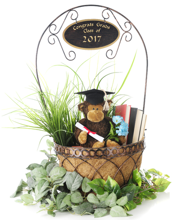 A graduating monkey in a basket of books and greenery with Congrats Grads Class of 2017 on the handle.  On a white basket. Stock Photo