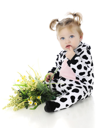 An adorable baby girl looking confused in her cow costume, a small bunch of yellow flowers in her lap.  On a white background. Imagens
