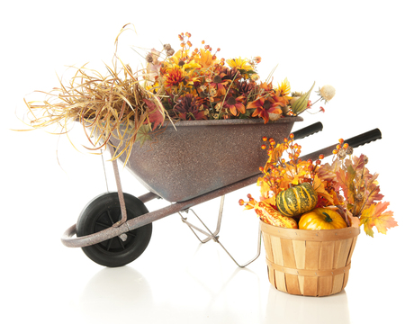 A wheelbarrow and basket full of colorful fall foliage. Isolated on white. Imagens - 115279023