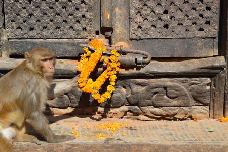 Rhesus monkeys at the Swayambunthan temple in Kathmandu, Nepal Stok Fotoğraf