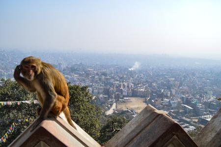 Rhesus monkey sits on the walls of Swayambunath Temple overlooking Kathmadu, Nepal Stock Photo