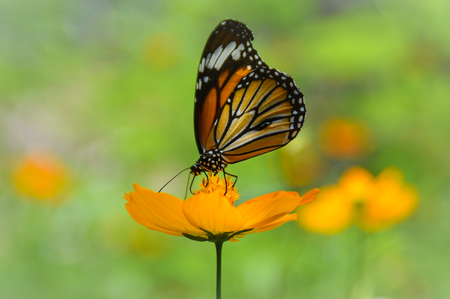 Side view of a butterfly sitting in the center of a flower Stock Photo