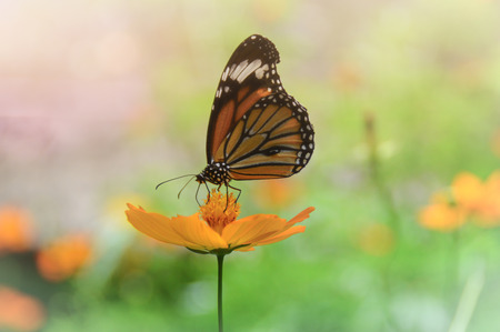A closeup of a butterfly sitting on a flower Stock Photo