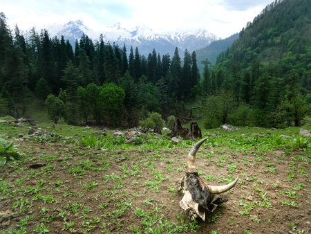 The wild nature in the Himalayas mountains of Himachal Pradesh in India