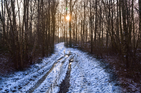 frozen and snow covered hike in a deciduous forest at sunset in the Hunsrueck