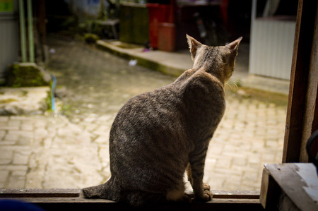 Although this domestic cat might be outside to enjoy the freedom, she prefers to stay home.